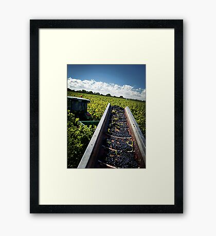 The Last Row of Harvest Framed Print