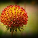Flower Bud by fantasytripp