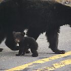 Black Bear Mother & Cub by Molly  Kinsey