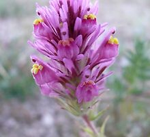 WILD FLOWER by AMHERN0525