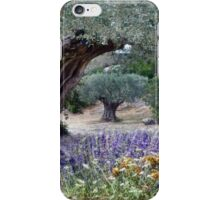 under the old olive tree iPhone Case/Skin