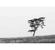 Route 27 Serengeti Photographic Print
