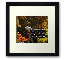 Autumn Cocky Framed Print