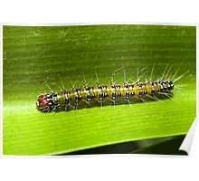 Caterpillar Poster