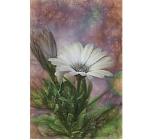 Sketchy Daisy In Mother Of Pearl Photographic Print
