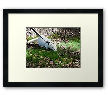 Beautiful Brutus Framed Print
