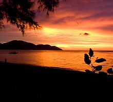 Penang Sunset by Darrell Kelsey
