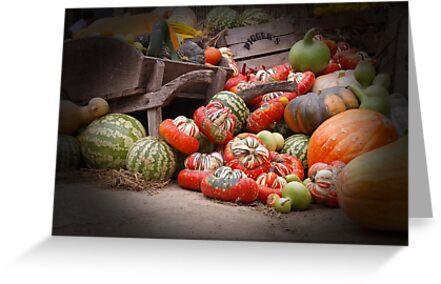 Just love pumpkins by Judi Corrigan