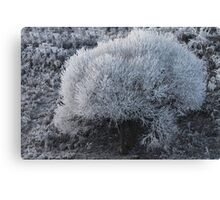 Hoarfrost Canvas Print