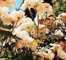 Rose patch by Baztil