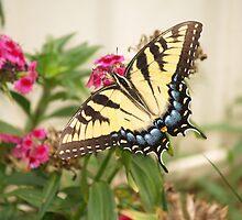 Tiger Swallowtail by Jim  McDonald