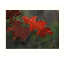 Fall Oak Leaf Art Print
