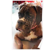Christmas Day Portrait - Boxer Dog Series Poster