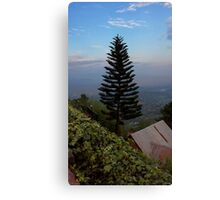 Hillside Fir Tree Canvas Print