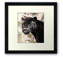 Beauty of the Beast Framed Print