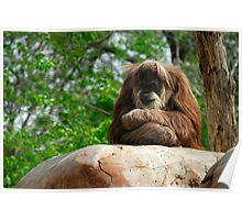 Sleepy Oranguntan! Poster