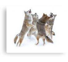 Coyote Sing-along Canvas Print