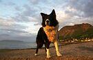An Old Seadog. by Michael Haslam