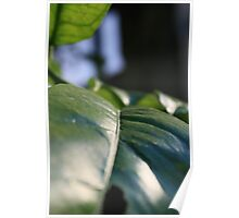 Brush of Leaf Poster