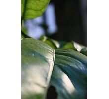 Brush of Leaf Photographic Print