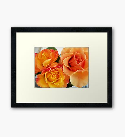 Peach Rose.. Framed Print