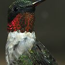 Mr. Hummingbird 2008 by Dennis Jones - CameraView