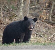 Mama Bear by Molly  Kinsey