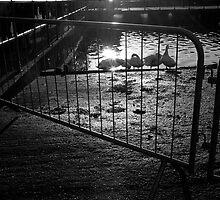 Flare Through Fence by Matt Roberts