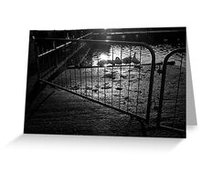 Flare Through Fence Greeting Card