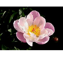 Bright Blossom Photographic Print