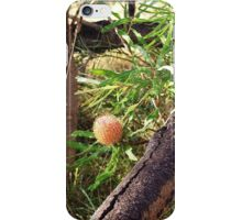 Banksia and Log iPhone Case/Skin