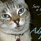 Adopt! by Crockpot