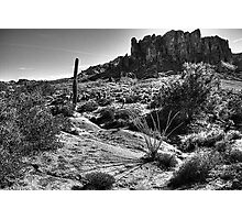 Sonoran Desert at Lost Dutchman State Park Arizona Photographic Print