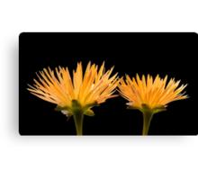 Golden Ice Plant Canvas Print