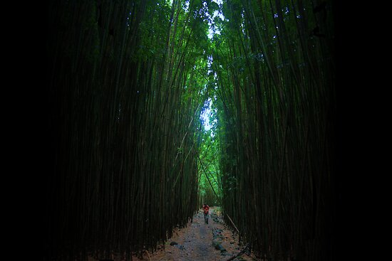 Bamboo Forest by Stuart Green