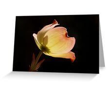 Dogwood Highlight Greeting Card
