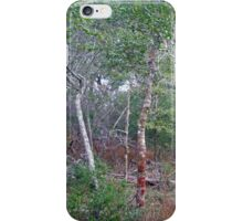 Wild Holly Trees - Buxton - Hatteras Island - North Carolina - Outer Banks iPhone Case/Skin