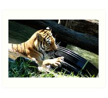 Tiger Playing Art Print