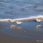 Sandpipers Chasing the Waves by Mary Campbell