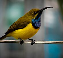 """Bird on a Wire""! by Sue  Fellows"