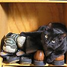 Cat and Shoes by MuscularTeeth