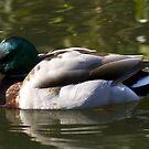 Floating by Steve plowman