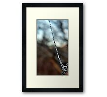 A strand of drops along the web Framed Print