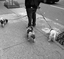 New York Street Photography 36 by Frank Romeo