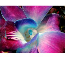 Singapore Orchid Photographic Print