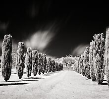 Tree line, Carrick Hill, S.A, Australia by Anna Vegter
