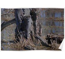swamp stumps Poster