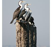 4 Out of 5 Cormorants Pleased with 2020 Summit by dale rogers