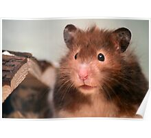 Harry the Hamster Poster