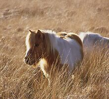 pony in the grass by Lucan  Netley (LDN Photoart)